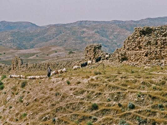 Even more amazing is the fort, 'Shiyagh', built at the top of high hill, covering tens of hectares and with walls seven to ten metres high and two metres thick. It is estimated to be 2000 years old and was probably used as a storage for grain from Mesopotamia in the Sassanian era.